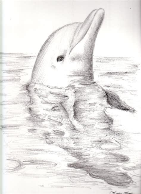 dolphin  fantasydreams  deviantart