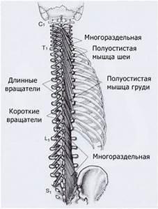 Курс лечения при шейном остеохондрозе доной