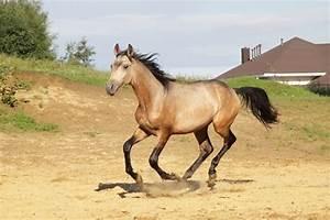 Common Horse Coat Colors  U2013 The Horse