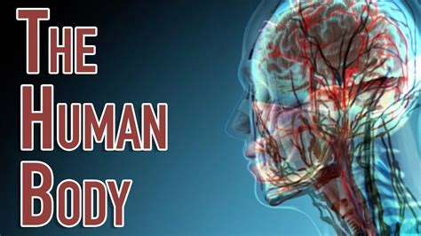 human body facts   parts   human body