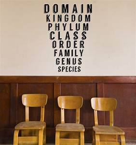 Science class taxonomy decal biology classroom decal for Awesome science wall decals