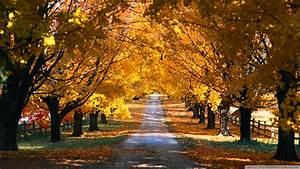 Download Tree Tunnel Road Autumn Wallpaper 1920x1080 ...