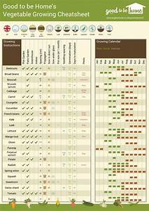 Your Personalised Vegetable Growing Cheat Sheet
