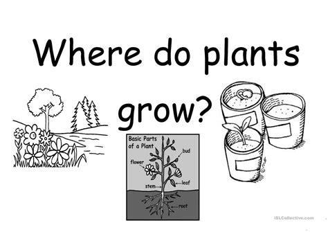 worksheet plants worksheet grass fedjp worksheet study site