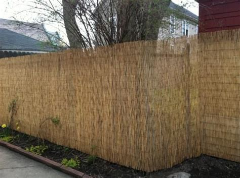 Backyard Xscapes 6 Ft H X 16 Ft L Reed Fencing Staple