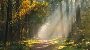 Download, Wallpaper, 2048x1152, Forest, Path, Sunlight, Trees, Ultrawide, Monitor, Hd, Background
