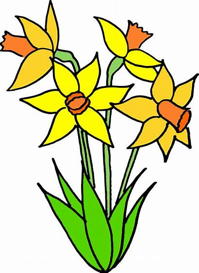 Flower Clipart Bulb Transparent Daffodils Clip Spring