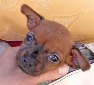 Alter In Wochen Berechnen : welpen fotos ern hrung erziehung pflege hunde welpe ~ Themetempest.com Abrechnung