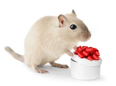 christmas presents  pets