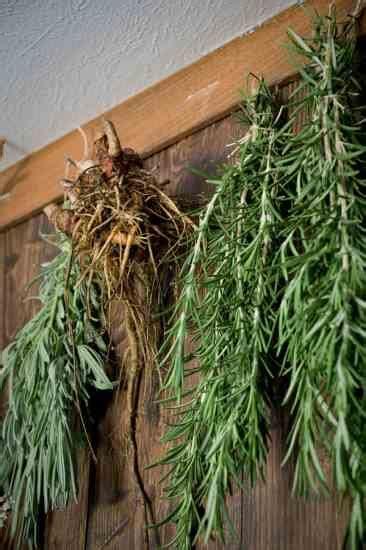 dry herbs  optimal quality homesteading