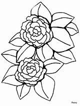 Coloring Peony Flowers Printable Flower Coloringpagebook Advertisement sketch template