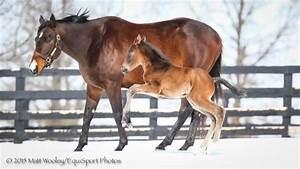 Rain Light Merck Animal Health Presents Foals Of 2015 Winter Play