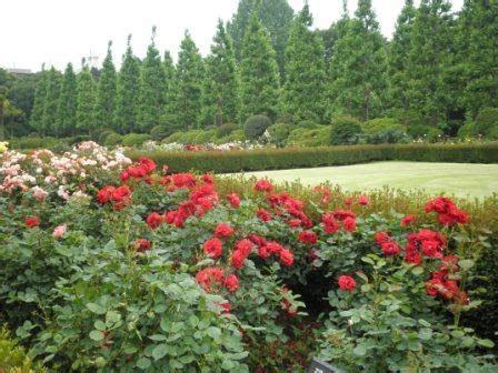 Así Es Mi Vida En Tokio El Jardín De Rosas En Shinjuku