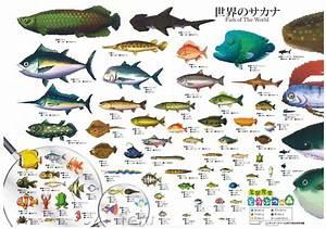 Fish Animal Crossing Wiki