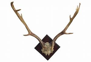 Fallow deer antler wall decor natural from one kings lane for Antler wall decor
