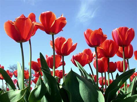 May Flowers Wallpaper Wallpapersafari
