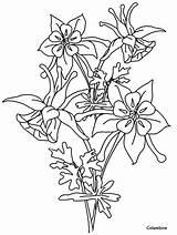 Columbine Coloring Flowers Pages Flower Drawing Line Printable Advertisement Coloringpagebook Cartoon sketch template