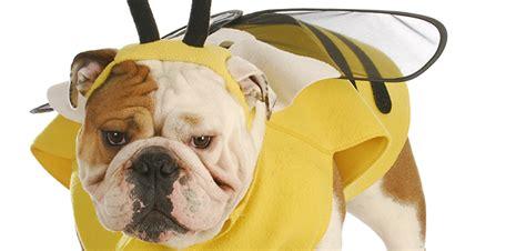 dogs  bee stings handling  bee sting   dog