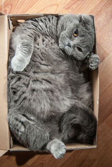 fat cat   box luvbat