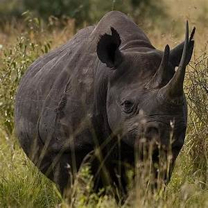 343 best images about Rhino on Pinterest