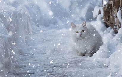 Winter Backgrounds Computer Snow Cat Cats Kittens