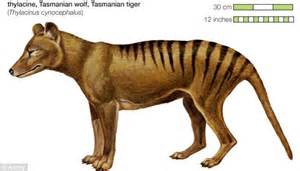 Could the Tasmanian tiger still be roaming the island's ...