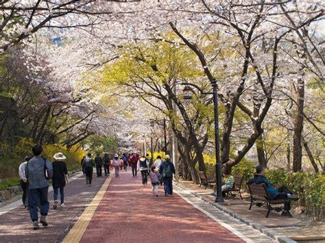 tempat wisata gratis  korea selatan travelling hemat