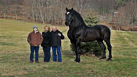 biggest horse horses ever ten had