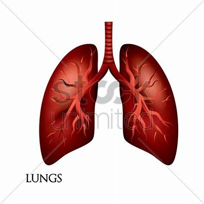 Lungs Vector Illustration Stockunlimited Graphic