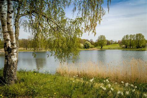 Britzer Garten La by Brzozy Nad Jeziorem W Parku Britzer Garten W Berlinie