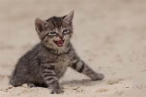 Wie Fange Ich Eine Katze : wie w rst du wenn du eine katze w rst ~ Markanthonyermac.com Haus und Dekorationen