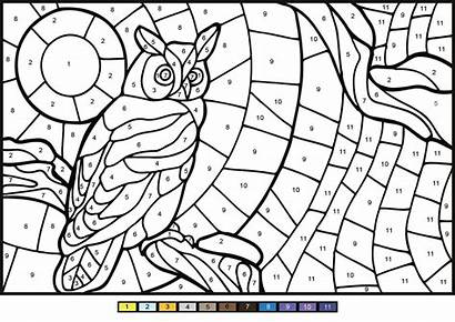 Number Owl Coloring