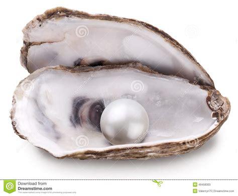 le berger l perle hu 238 tre avec la perle d isolement photo stock image 49458303