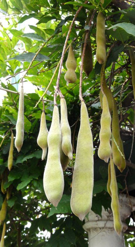 wisteria seed pods how to grow 3292 best garden variety images on pinterest flowers garden gardening and beautiful flowers