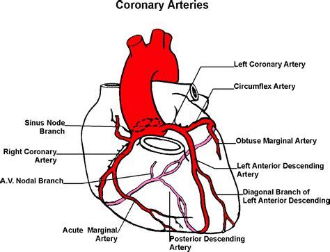 What do you mean by the term. Coronary Artery Disease at Samuel Merritt University - StudyBlue