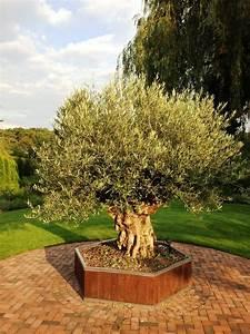 Große Pflanzkübel Für Draußen : gro e beheizte pflanzk bel f r palmen olivenb ume und citruspflanzen ~ Sanjose-hotels-ca.com Haus und Dekorationen