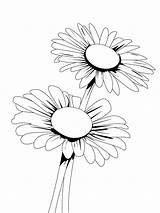 Daisy Coloring Pages Flower Flowers Printable Recommended sketch template
