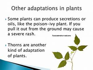 Plant And Animal Adaptation