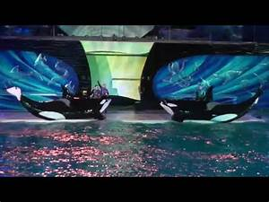 Seaworld San Diego Light Show Shamu 39 S Celebration Light Up The Night Seaworld San