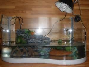 Come allevare le tartarughe acquatiche
