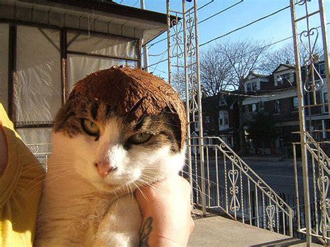 cats wearing fruit helmets maret  lowongan kerja