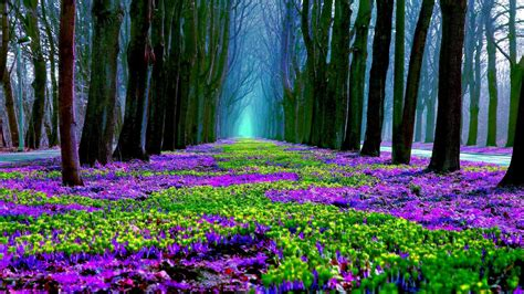 spring hd wallpapers  background pictures