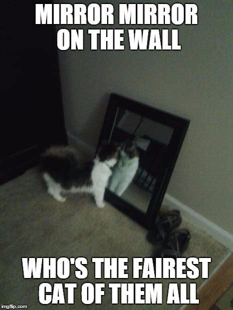 Mirror Meme - snow white queen cat imgflip