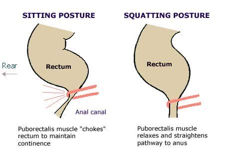 Cure Pelvic Floor Dysfunction by The Rectum What Happens When You Sit