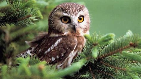 Owl Wallpapers by Owl Wallpaper 2 For The Of Owls Owl Wallpaper