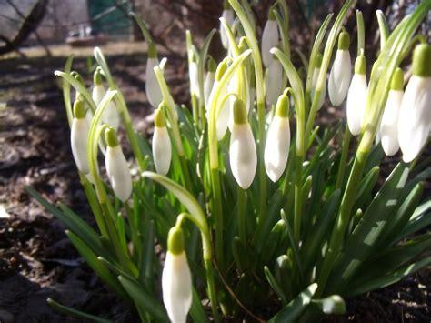 pavasaris - Ikimokyklinukas - Mamyčių klubas