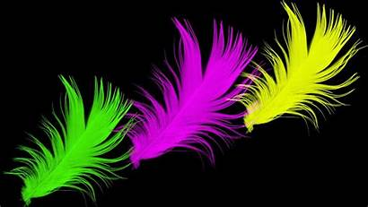 Bright Neon Wallpapers Desktop Colorful Feather 3d