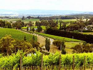Wineries, Food and wine, Yarra Valley and Dandenong Ranges ...