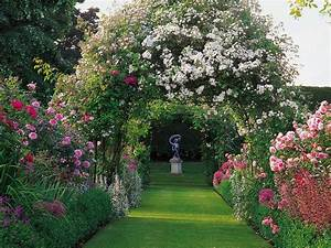 How To Plant Roses Planting Roses HGTV