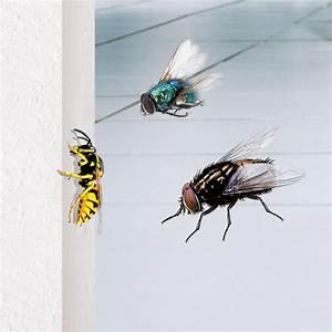 Wespen Im Haus : fliegende insekten bestimmen und bek mpfen ~ Lizthompson.info Haus und Dekorationen